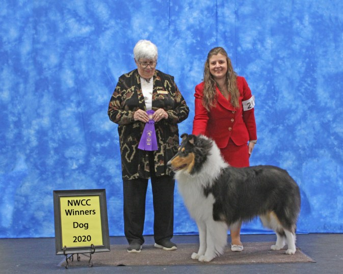 wyndlair-cherokee-black-ice-tricolor-rough-collie