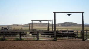 Pathfinder Ranch corrals