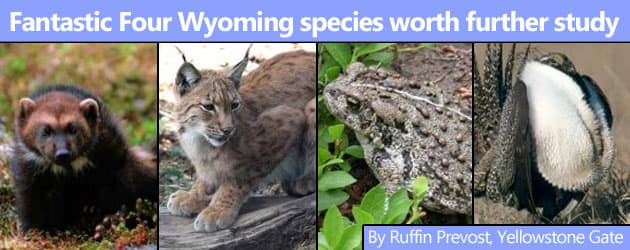 Fantastic Four Wyoming species worth further study