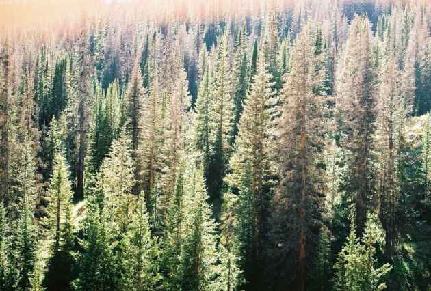 Sunlight fills a forest outside of Laramie, Wyoming