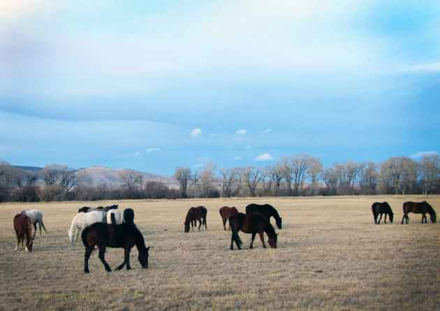 wild horse sanctuary in Wyoming