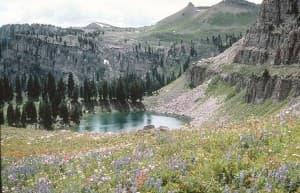 Wyoming wildflowers: Carpet of wildflowers near Marion Lake in Teton backcountry