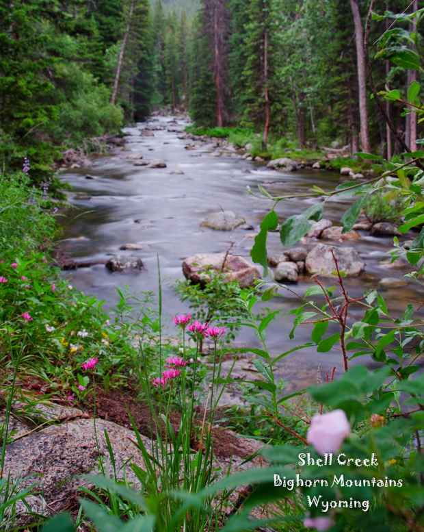 Mountain Wildflowers along Shell Creek in the Bighorn Mountains of Wyoming (Jason/Flickr - click to enlarge)