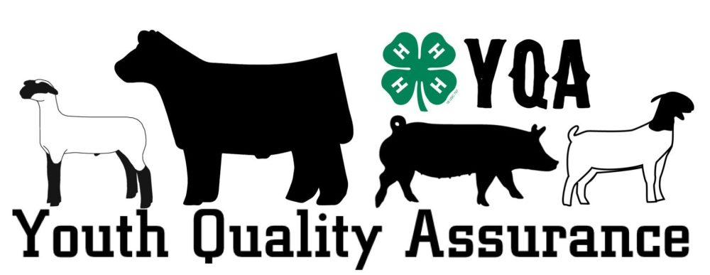 medium resolution of youth quality assurance park county 4 h regarding 4h livestock clipart free