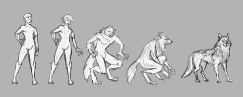 A transformation sequence from human to wolf, across five figures: 1. human 2. longer hair, ears, and teeth 3. covered entirely in fur with claws and a tail and slightly protruding muzzle 4. Crouching with head fully taking the shape of a wolf's 5. Wolf