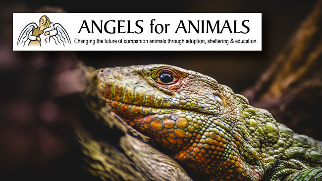 Herps Alive Foundation Reptile Adoption Day