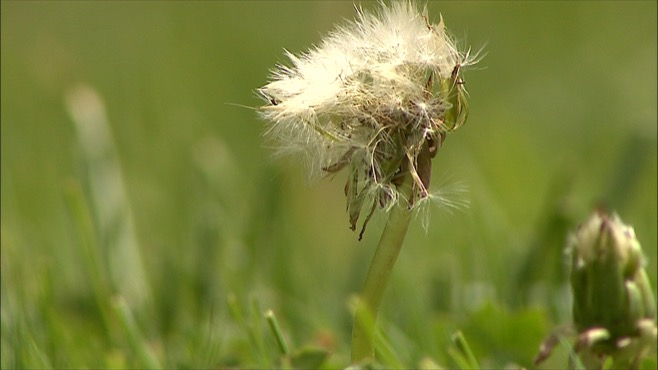 2015 allergy season has been brutal for sufferers in Youngstown, Ohio_40267