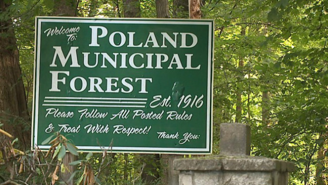 Poland Municipal Forest_47992
