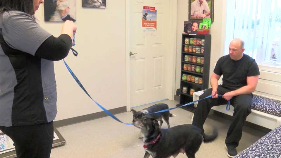 Dr. Nicole Pearsall, Boomer, Penn-Ohio Veterinary Services