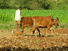 Agriculture sector union budget