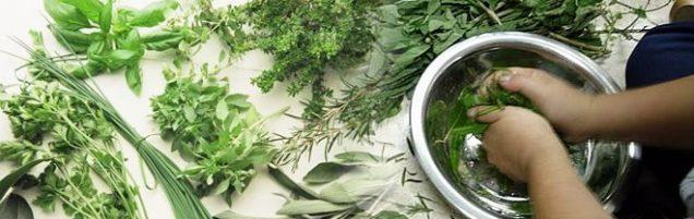 Resultado de imagem para banhos de ervas