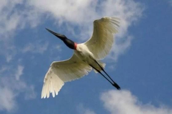 pantanal-mundodasaves-blogspot-com