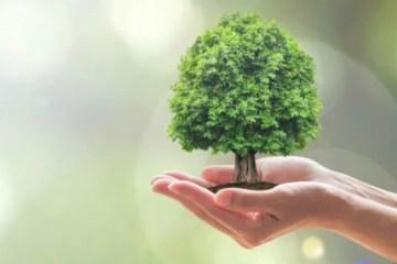 Por uma nova economia para cuidar da Terra