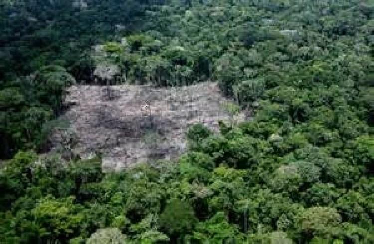 desmatamento-wwf-org-br