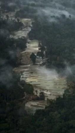 Desmatamento sob a mira de nova tecnologia