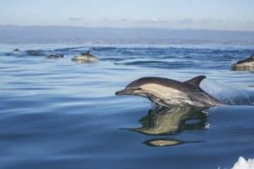 Toninha: Mulheres lutam para proteger o golfinho mais ameaçado do Brasil
