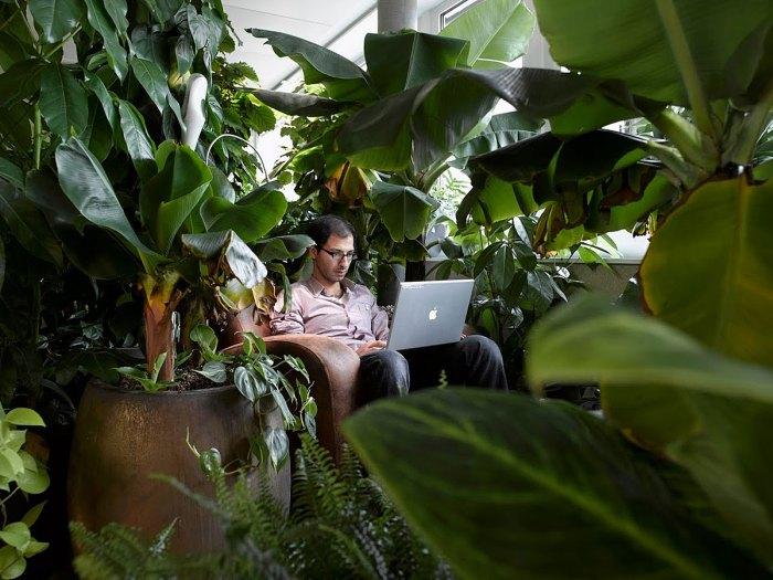 Google Zurich: ambiance tropicale, propice à la créativité.