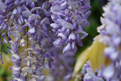 Sony Alpha 6400: glycine.