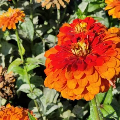 Oppo Reno6 Pro 5G: floral, macro 3x.