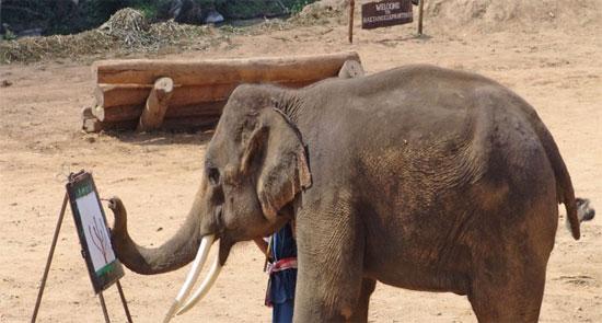 Ο ελέφαντας που μιλάει κορεάτικα!