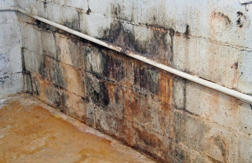 Molds on wall - Xcellence Inspection Services - Mold Inspection Chicago