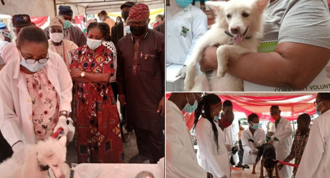 Lagos to vaccinate 1.5 million dogs for free