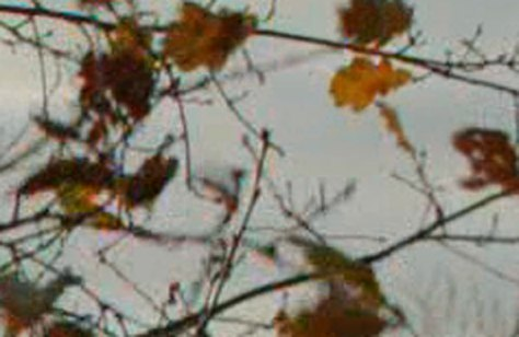 leaves-crop-f3 This is why you want an external recorder!
