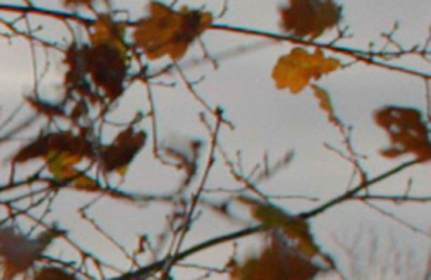 leaves-crop-sam This is why you want an external recorder!