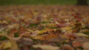 24mm-leaves1-300x168 Samyang (Rokinon) Cine Prime Lenses