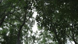 Grab-thru-trees-300x168 Scheider Xenon FF Prime Lenses.