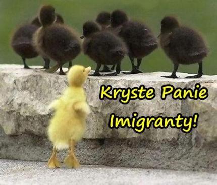 Imigranci, śmieszne, besty, kurczaki, humor, memy - xdPedia (98084)