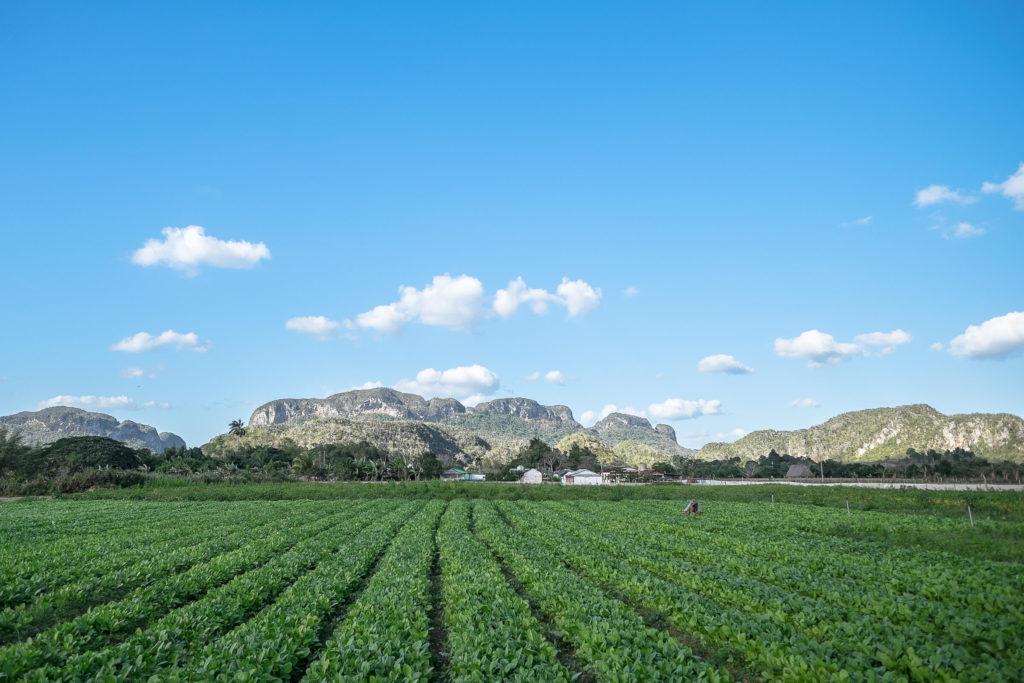 Das grüne Tal von Vinales