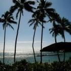 Dato Curioso: El alfabeto Hawaiano contiene sólo 12 letras.