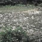 88 mil hectáreas afectadas por contingencias climatológicas