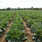 Intermediarios un mal necesario por falta de organización en productores mixtecos: Sedapa