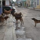 Aumenta población de perros callejeros en Zaragoza