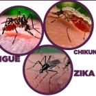 Mantiene IMSS vigilancia por dengue, zika o chikungunya en Huajuapan
