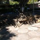 Se inconforman por poda de árboles en parque de Camotlán