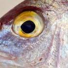 Incrementa 40% precio de los mariscos por el inicio de la cuaresma