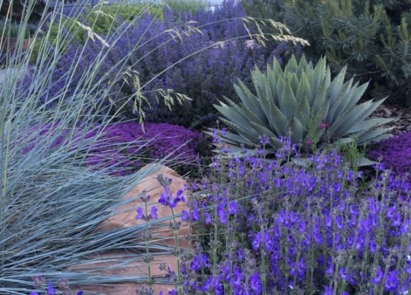 xeriscape design and landscaping