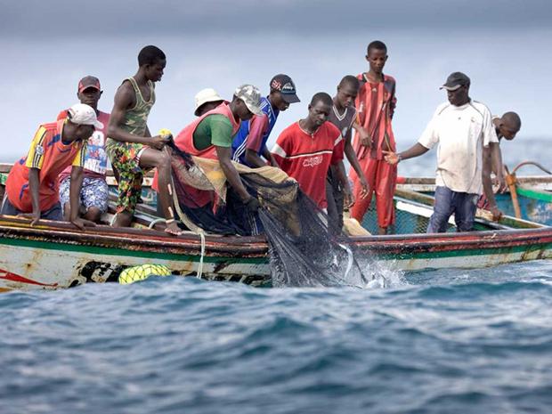 Réunion internationale sur la pêche : Le Sénégal défendra les requins à Majorque