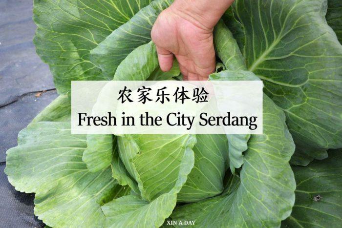 Fresh in the city serdang