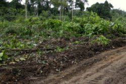 Agricultor desaparecido retorna a Altamira e conta que fugiu de homens armados