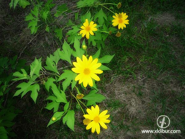 Flores flores y ms flores