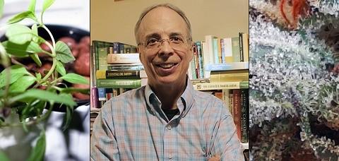 """ד""""ר איתן רוסו - אחד החוקרים הבולטים במחקר הטרפנים והקנבינואידים"""