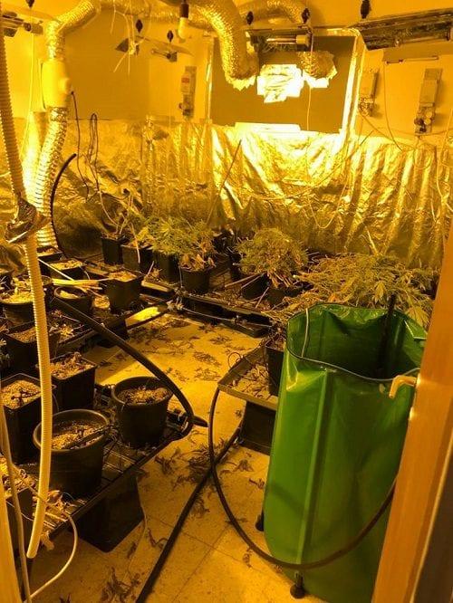 a Grow room