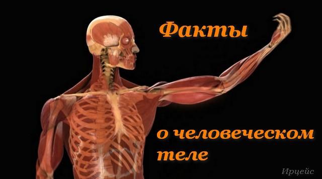 110632944_large_3720816_chelovek_telo