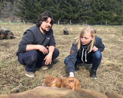 Schweine streicheln: von wegen dumme Sau