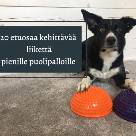 pp20_tuotekuva