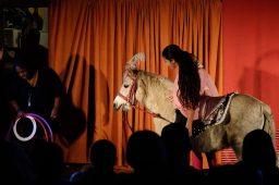Cirkus med heste